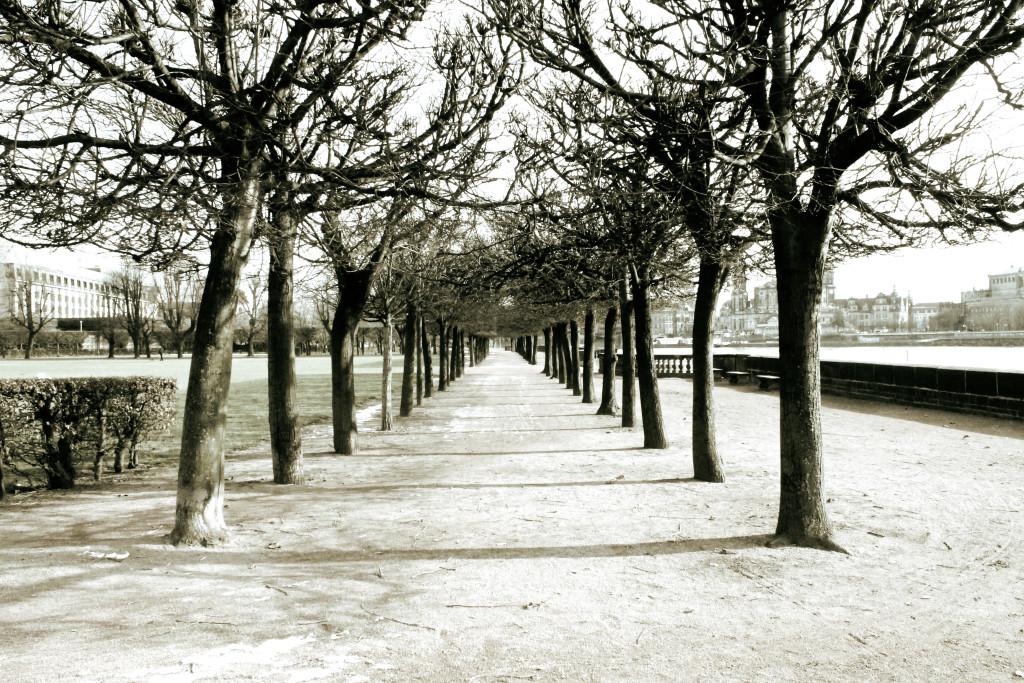 Bäume am Elbufer
