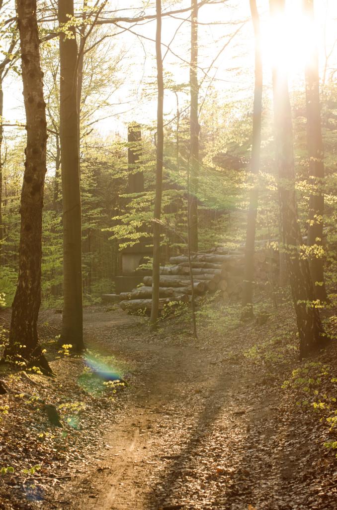 Die Dresdner Heide schließt direkt an Löschwitz an und lädt zu einer Radtour oder einem Spaziergang ein