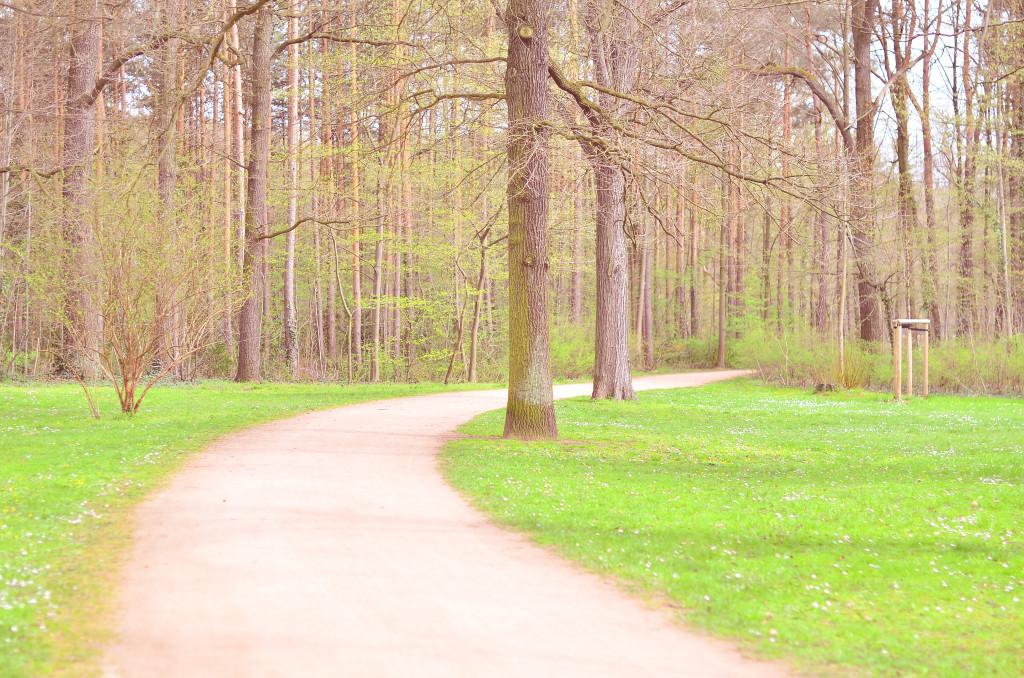 Waldpark 2