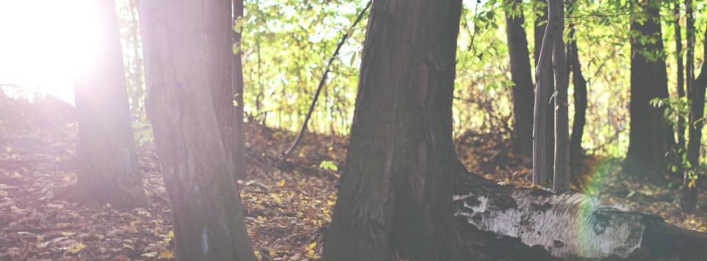 Wandern durch Wälder - besonders im Herbst sehr beliebt.
