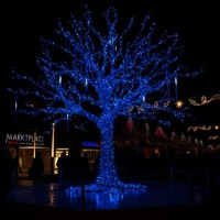 Blauer Baum auf de Augustusmarkt