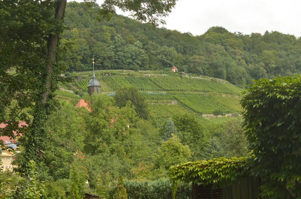 Ein Wanderweg führt durch die Pillnitzer Weinberge und bietet einen wunderbaren Blick auf den Stadtteil
