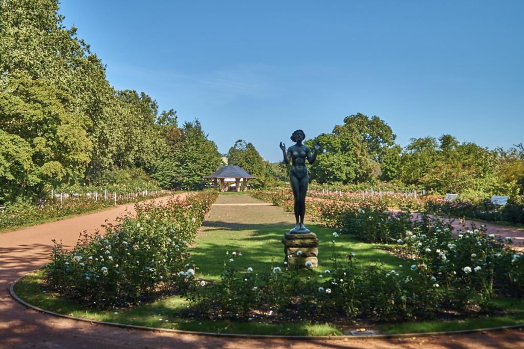 Wenn im Rosengarten alles blüht, ist es einer der schönsten Orte Dresdens!