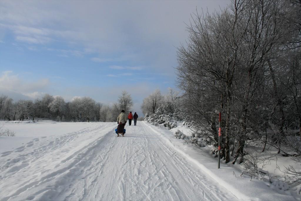 dresden schlitten wintersport