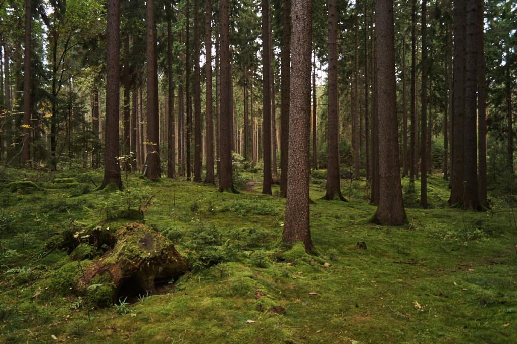 In der Dresdner Heide findet man immer ein gutes Versteck!