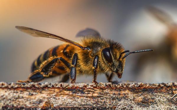 Die Erhaltung der Bienen ist sehr wichtig!