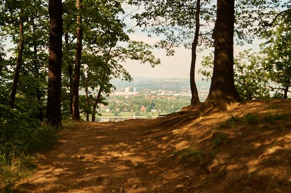 weg zum zuckerhut in Stadtteil Dresden Hosterwitz_2