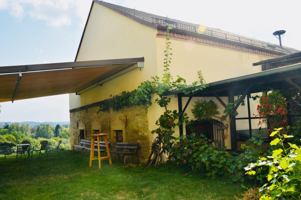 Weinanbau auf dem Gut Presterwitz