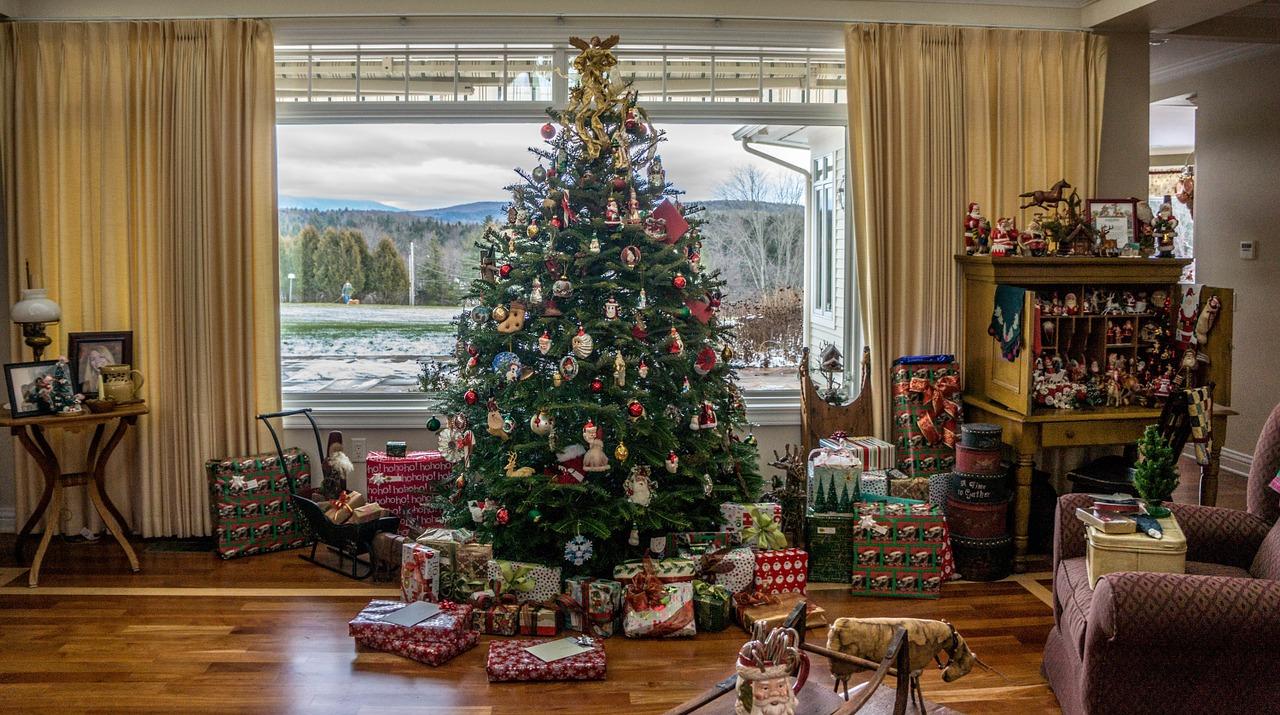 Wo Finde Ich Meinen Perfekten Weihnachtsbaum So Lebt Dresden