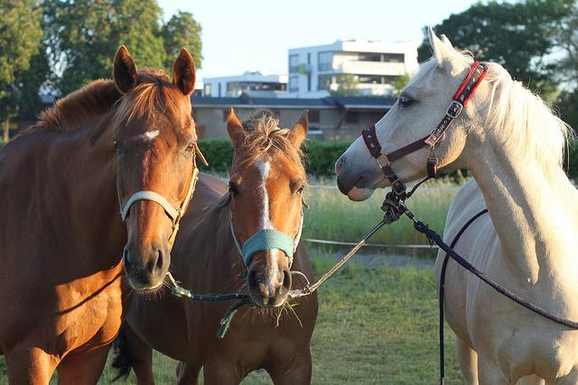 Die Pferde aus Seidnitz. ©Maria Kowal