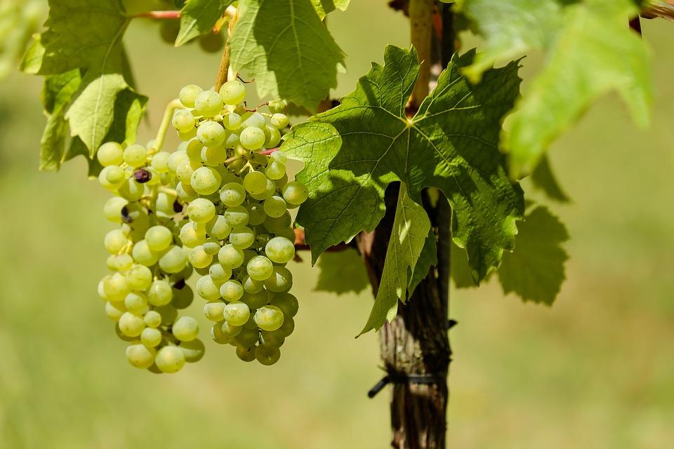 Was gibt es besseres als einen guten Schluck Wein aus der Region?