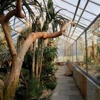 Botanischer Garten_Sukkulenten_groß_Titelbild