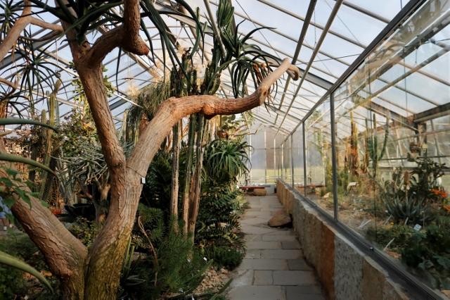 In den Gewächshäusern erfahrt ihr viel über die exotischen Pflanzen.