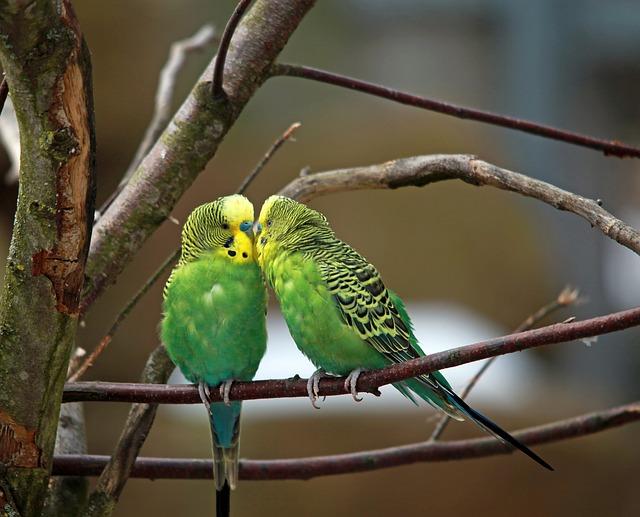 Auch für Vögel gibt es allerlei.
