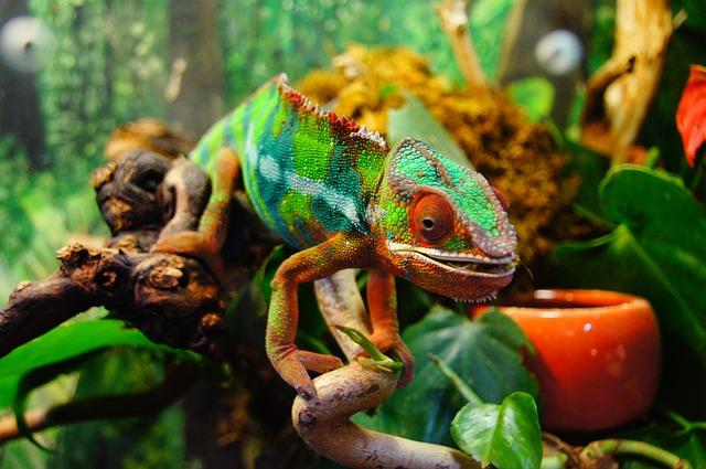 Selbst Chameleons kannst du finden, sowie Wärmelampen und andere Dinge welche ein Reptil benötigt.