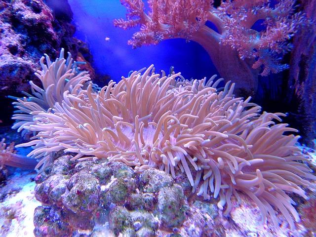 Gerade Korallen sehen in einem Meerwasseraquarium wundervoll aus!