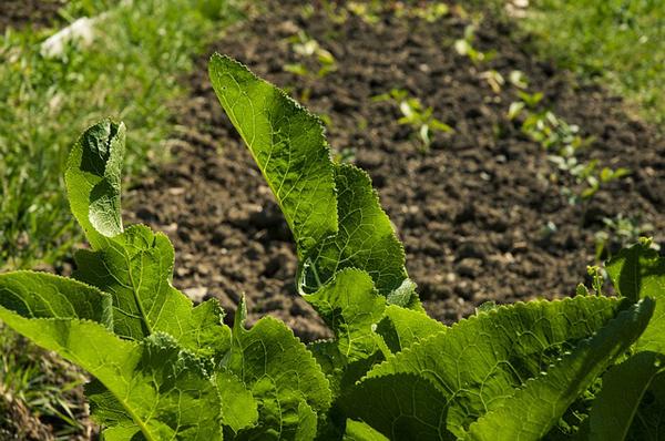 Was gibt es schöneres, als sich auf den Salat aus eigenem Anbau zu freuen?