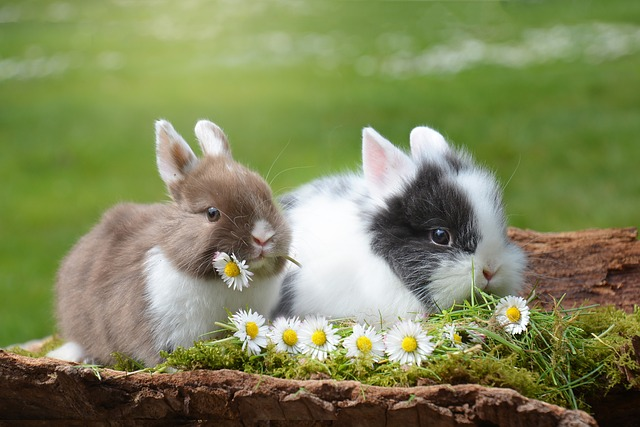 Wir wünschen dir ein schönes Osterfest