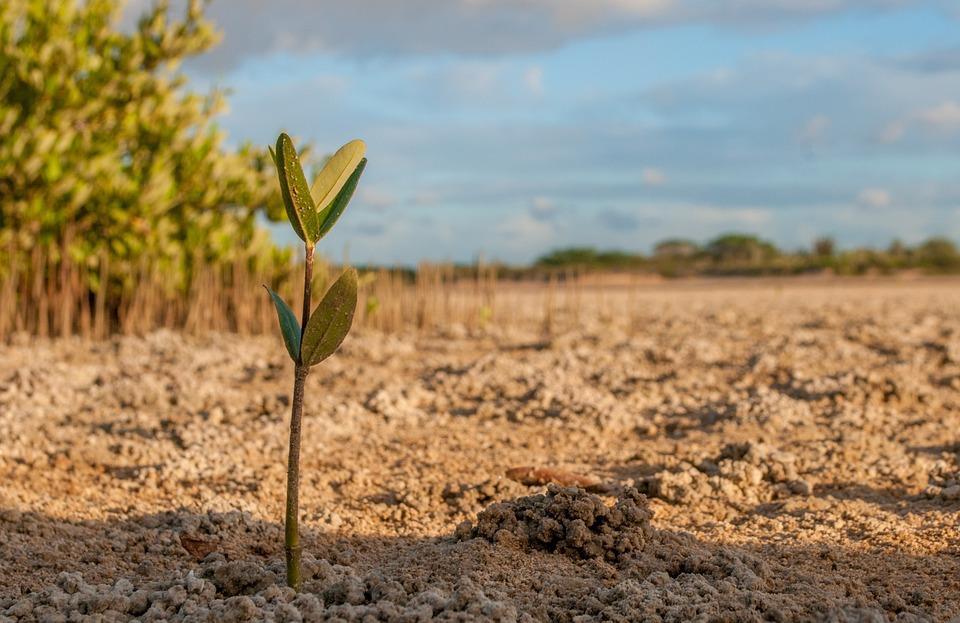 Pro verkauftem Riegel wird ein Baum in Madagaskar gepflanzt.