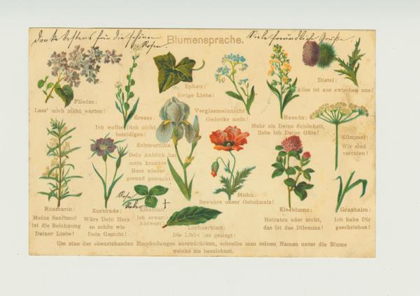 Postkarte mit Blumensprache um 1900 (Pressebild DHMD)