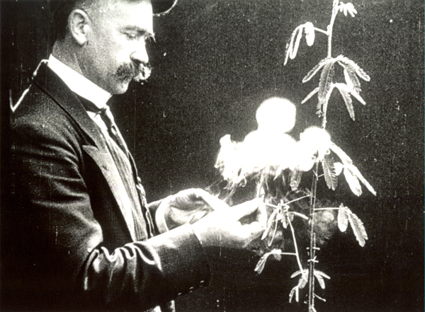 André Bayard La Sensitive, Éclair, 1914, Film (Pressebild DHMD)