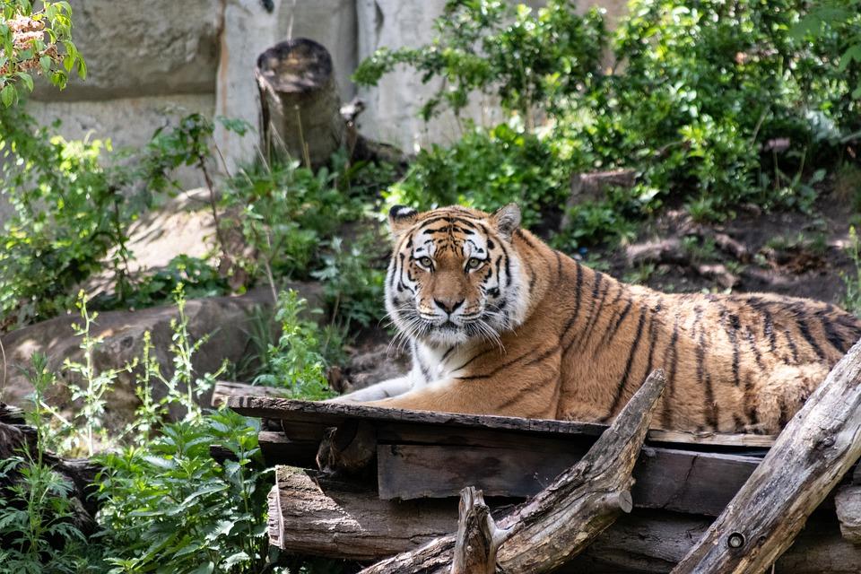 Unzählige Tierarten könnt ihr im Leipziger Zoo entdecken.