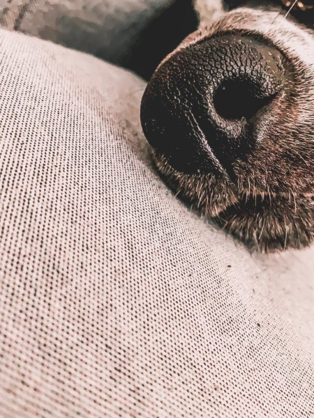 Dresden_mit_Hund.Hundenase.Tilda