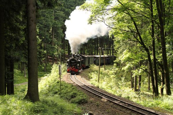 Genießt die idyllische Fahrt über Wald, Wiesen und sogar Seen.